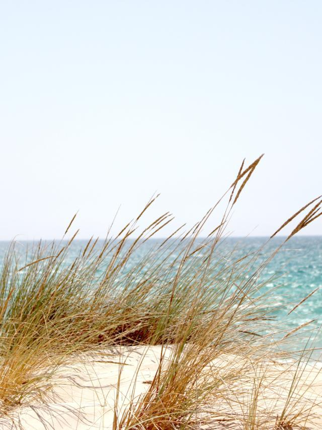 Beach Dawn Dune 662994