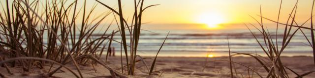 Beach Golden Hour Grass 1192671