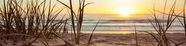 Beach Golden Hour Grass 1192671