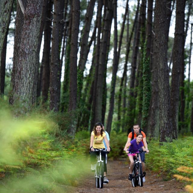 Vélos Foret2